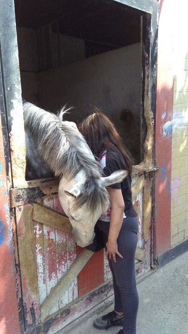 Los chicos de la Casa de reposo reciben terapias con caballos